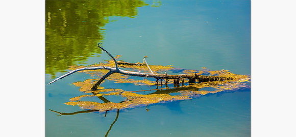 Damsel Fly On A Lake By Tom Potter
