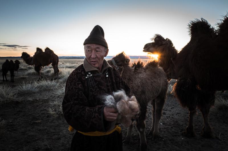 Dash e i suoi cammelli