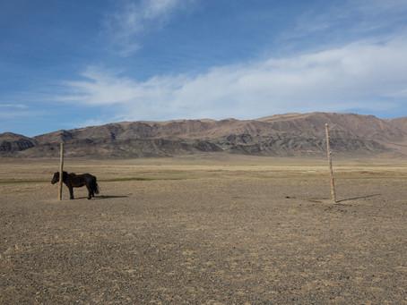 Sarò in Mongolia fino al 17 maggio