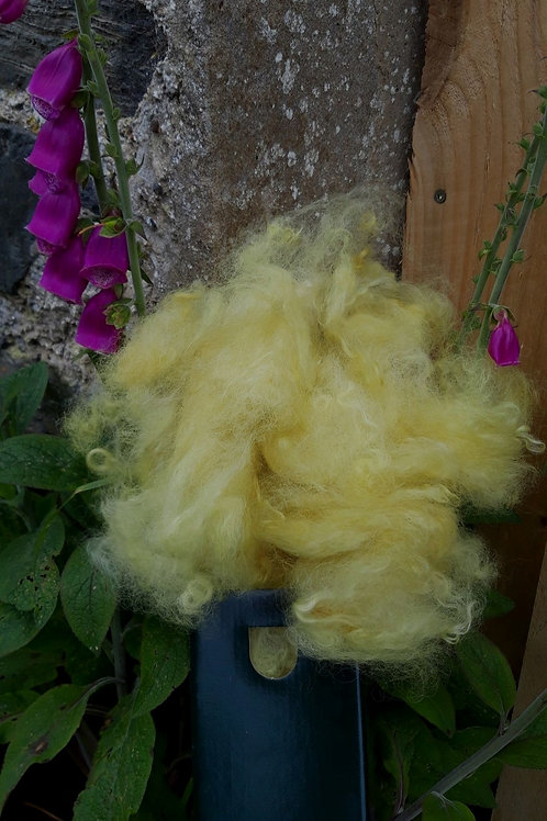 Carded Wool - plant dyed Box