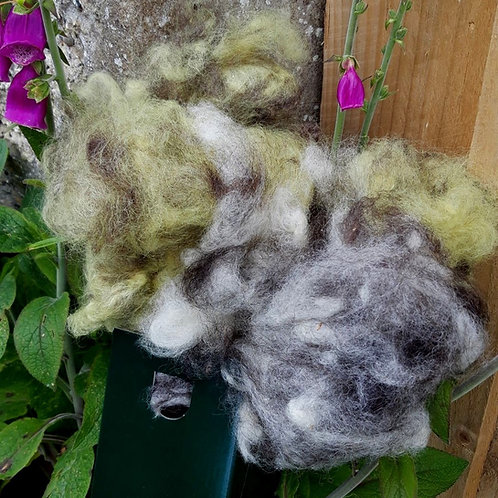 Carded Wool - Mixed Box
