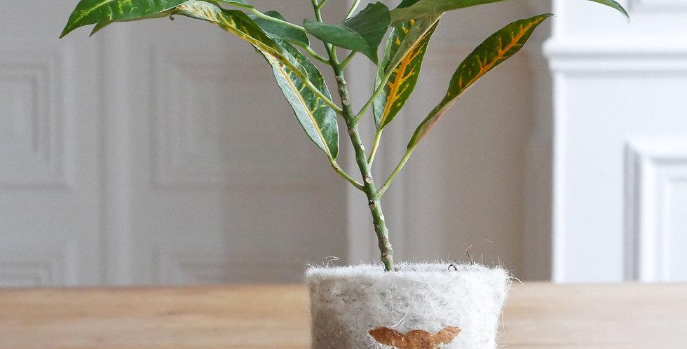 FindWooly avec Croton Pétra