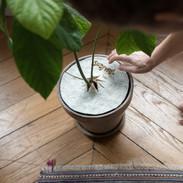 WoolyWoolPecker Moins d'eau, moins d'arrosage