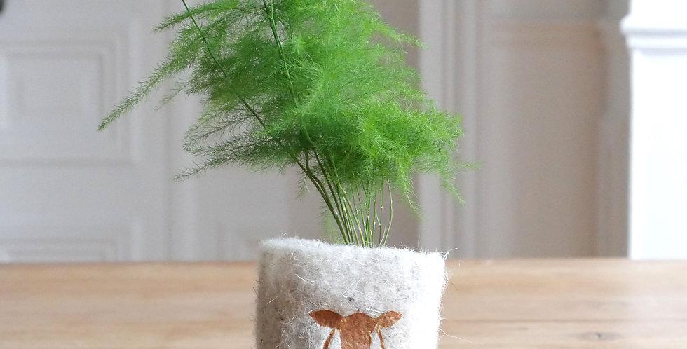 FindWooly avec Asparagus