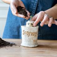 Replanter votre germe de tomate dans son FindWooly