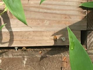 蜂が来た!