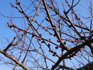 もうすぐ春🎵