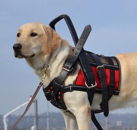 Service-Dog.jpg