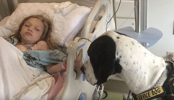 Service Dog Wins Best Day Ever