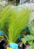 Plants in lawn & garden department