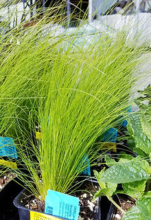 Plants in lawn & garden department