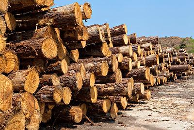 Griffin Hardware & Lumber Sawmill