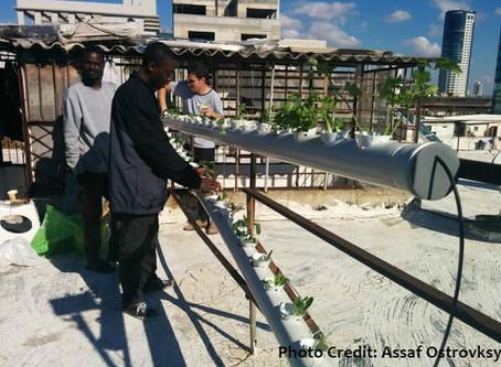 Urban Farming Vocational Workshop
