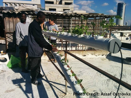 Urban Farming Vocational Workshop