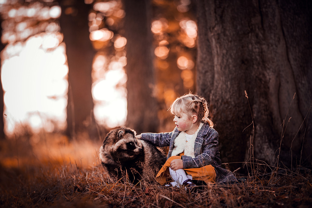 tanuki woodland photography portrait magical raccoon dog sugar moon