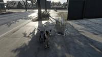 狗狗飼養VR體驗