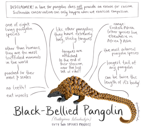 52species pangolin new.png
