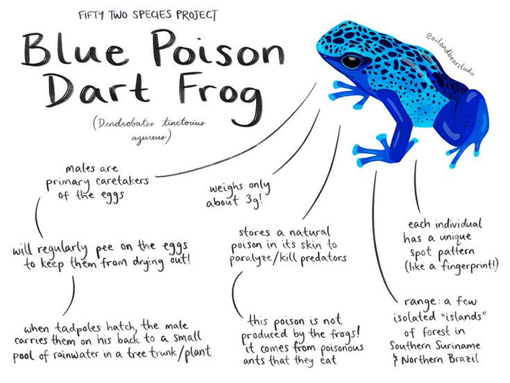 52species blue poison dart frog.png
