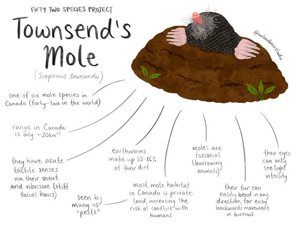 52species mole.png