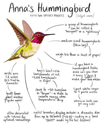 hummingbird 52species.png
