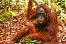 Happy World Orangutan Day and World Photography Day!