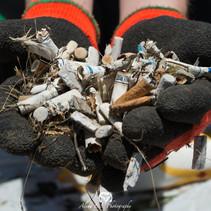 Volunteers Clean Up 11,000 Cigarette Butts At Esquimalt Lagoon