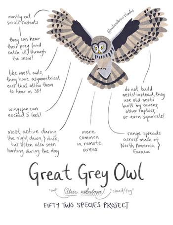 great grey owl 52species (updated).png