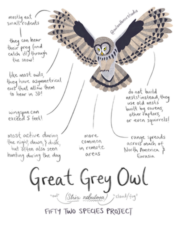 great grey owl 52species (updated).png