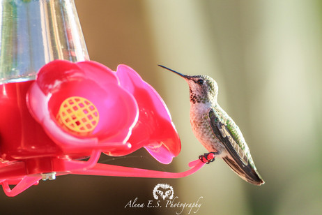 A Guide to Hummingbird Feeder Upkeep and Safety