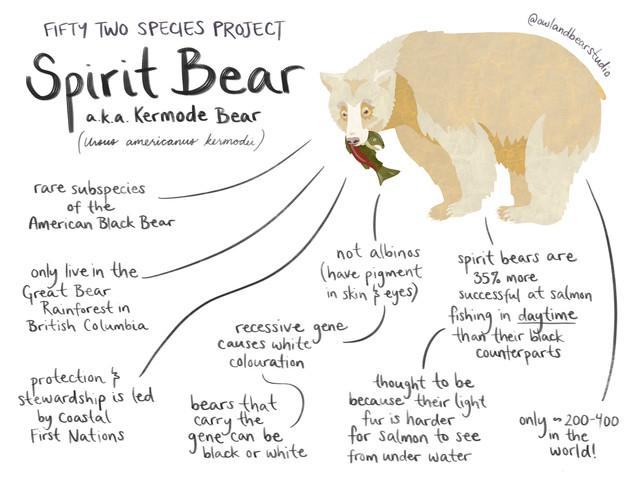 spirit bear 52species final.jpg