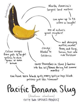 banana slug 52species.png