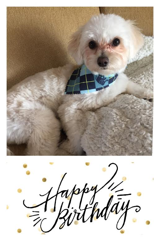 Marco (maltipoo from the Blantons) _ 1year