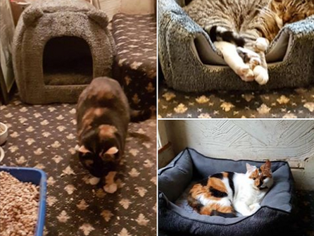 Rehomed: Twinkle, Star and Billy