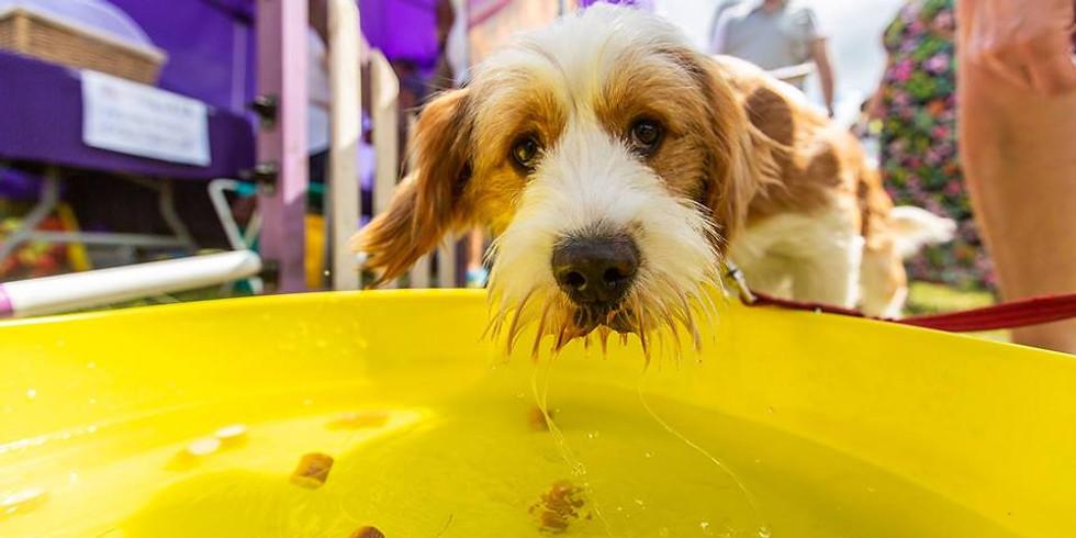 Newhey and Milnrow Community Dog Show