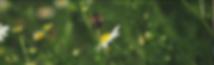Capture d'écran 2019-05-31 à 16.45.10.pn