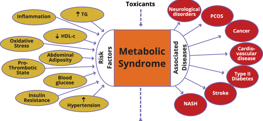 Sindrome Metabolica 2.png