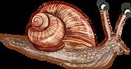 Garden_Snail.png