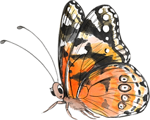 Butterfly_edited.png