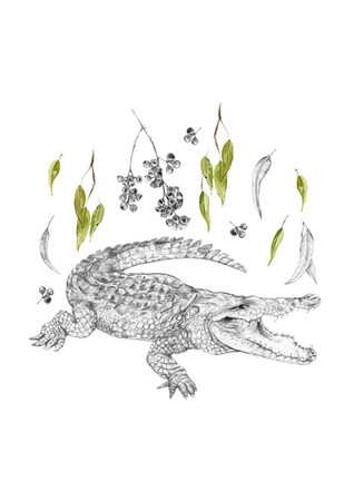 SlightfootCrocodile.jpg