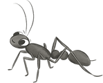 BULL_ANT_edited.png