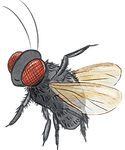 BLOW_FLY_edited.png