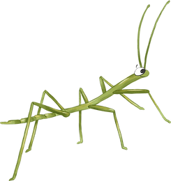 STICK_INSECT.png