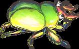 Shiney_Beetle.png