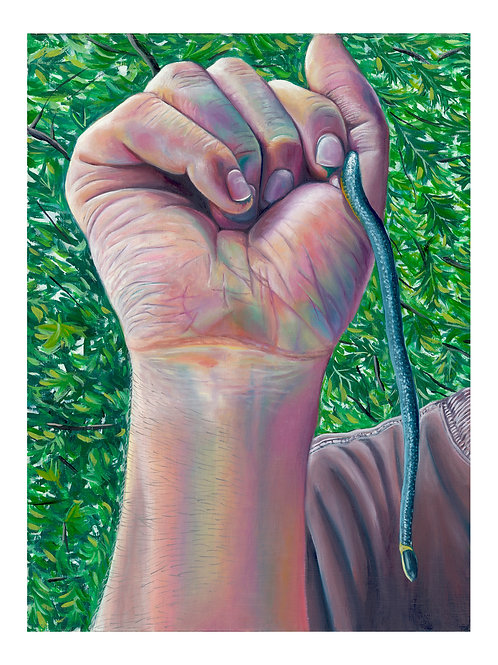 "Giclée Fine Art Print - Ring-Necked (8""x10"")"