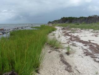 Comments Sought for Living Shoreline Work Proposal