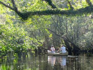 New Game Lands and Nature Preserve on the Waccamaw River!