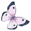 Watercolor%20Butterfly%205_edited.png