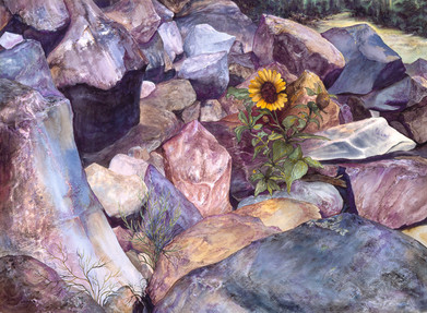 Sunflower of the Rockies