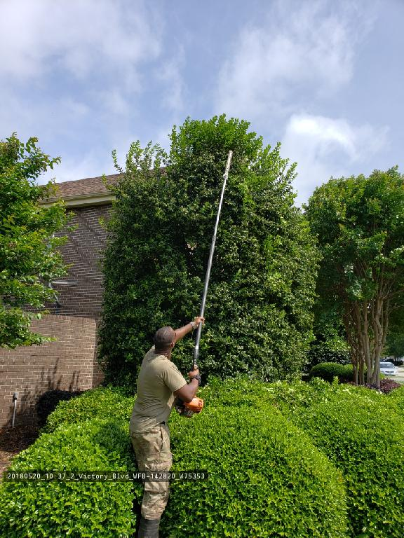 Shrub, tree trimming and hedges