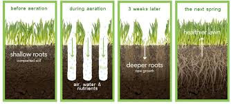 Description of the aeration process for turf